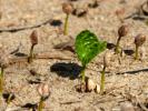 Экологи обнаружили незадействованные в сельском хозяйстве 900 миллионов гектаров