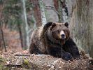 В Хабаровском крае медведь пробрался в дом к мужчине с ребёнком