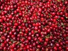 НДС на фрукты и ягоды снизят до десяти процентов