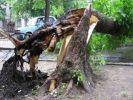 В Азербайджане россияне пострадали при падении ветки 500-летнего дерева