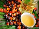 Malaysia Will Sue in WTO against EU Due to Restrictions on Palm Butter