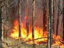 Forest Fires in Siberia have Reached One Million Hectares