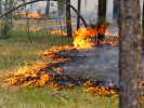 Wildfires Rage on the Territory of Four Regions of Russia