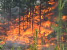 Petition for the Introduction of Emergencies in Siberia Collected 346 Thousand Signatures