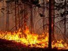 В МЧС осудили предложение не тушить лесные пожары