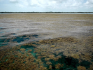Scientists Describe the Dynamics of the Largest Spot of Sargasso Algae in the Atlantic