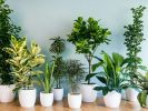 Учёные выяснили, как комнатные растения влияют на людей