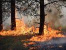 Разработана российская система прогноза лесных пожаров