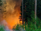 In the State Office of Public Prosecutor Declared Distortion of Statistics on Forest Fires