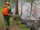 The Area of Fires in Siberia Decreased by a Quarter