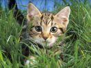 Медики: мурчание кошки поможет нормализовать нервную систему