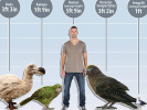 In New Zealand, the Remains of the World's Largest Parrot were Found
