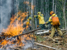 The Area of Forest Fires in Siberia Decreased by 1.2 Million Hectares