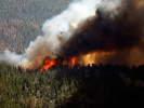 The Area of Forest Fires in Siberia Began to Decline