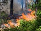 The Area of Forest Fires in the Russian Federation was Halved