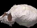 Мозг обезьян уменьшался и увеличивался в процессе эволюции