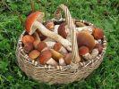 Учёные установили, что грибы помогут избежать рака предстательной железы