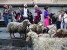 Участники митинга пригнали стадо овец к парламенту Грузии