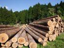 US Hardwood Exports to China Fall 40% This Year