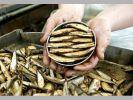 Россия купила оборудование латвийского завода по изготовлению шпрот за копейки