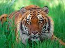 День защиты животных отмечают сегодня в мире