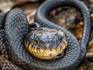 Носителями нового вида коронавируса могут быть змей
