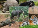 Учёные назвали причину вымирания многих животных