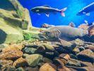Учёные обнаружили неизвестные виды рыб в озёрах Арктики
