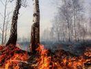 В Росгидромете предупредили о раннем наступлении лесных пожаров в РФ