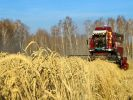 Experts: Russia's Suspension of Grain Exports Will not Affect Supply Volumes