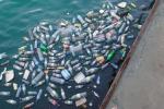 Названы регионы с самыми загрязнёнными пластиком водоёмами