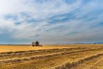 Качество фермерской продукции в России может упасть