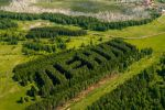 Lenin-Shaped Forest Was Captured in Siberia