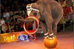 Зоозащитники призвали закрыть в России зоопарки и цирки с животными