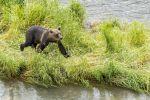 В Шанхае сотрудника зоопарка растерзали медведи