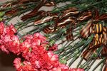 Цветы памяти