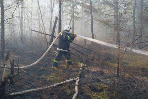 В Красноярском крае ликвидировано почти 50 га лесных пожаров