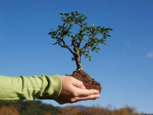 Губернатор Красноярского края принял участие в акциях по высадке деревьев