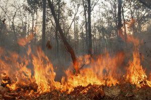 В Красноярском крае возможно осложнение лесопожарной обстановки
