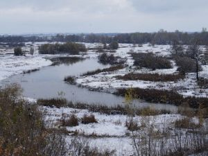 В Алтайском крае собрали рекордный урожая свеклы