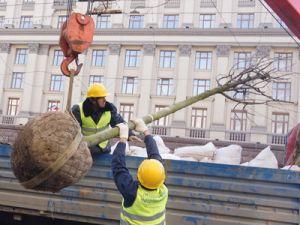 В Москве на Тверской начали высаживать липы
