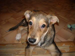 В Уфе проводится проверка по факту жестокого обращения со щенком