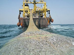 FAO and Vatican condemn illegal fishing