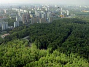 В Москве появятся новые зелёные территории