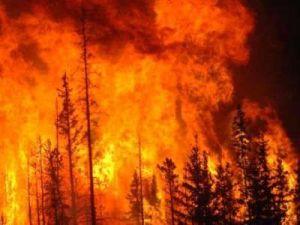 Почти 85% от общей площади лесных пожаров пришлось в 2016 году на 5 регионов