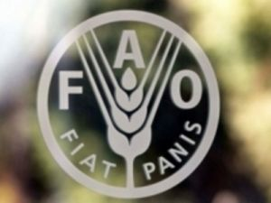 ФАО бьёт тревогу в связи с продовольственным кризисом в Йемене