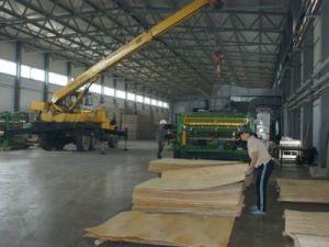 В Вологодской области с начала года увеличились объёмы производства пиломатериалов
