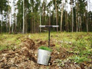 В Клинском районе в 2017 году восстановят свыше 250 га леса