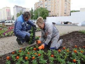 В 2017 году в Рузском округе высадили порядка 60 тыс. цветов