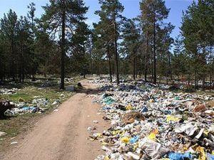 В Тюменской области увеличат штрафы за несанкционированные свалки в лесу